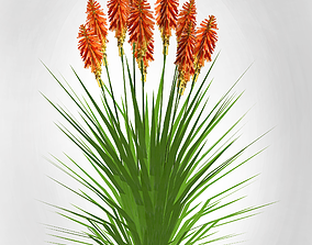 3D model Plant Kniphofia uvaria torch lily