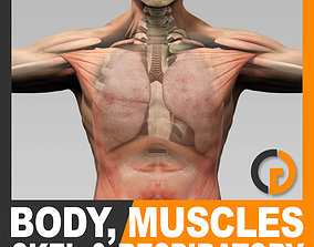 3D Human Male Body Muscular Respiratory System Skeleton -