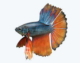 3D Betta Fish 9