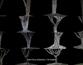 3D Tree Ficus Collection