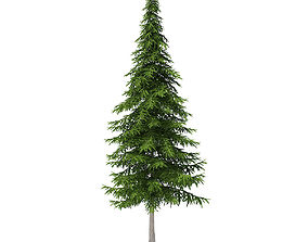 Fir Tree 10m 3D model