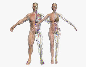 Full Female And Male Body Anatomy 3DSmax