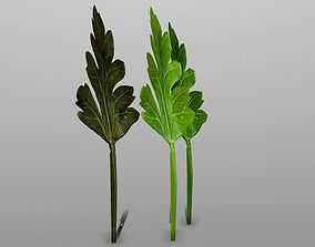 3D model Parsley