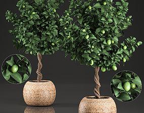 3D model Lemon Tree for the interior in basket 637