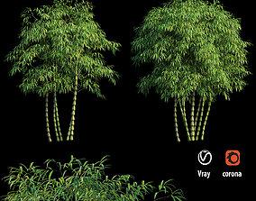 Bambusa ventricosa 03 3D