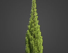 3D 2021 PBR Eastern Aborvitae Collection - Thuja