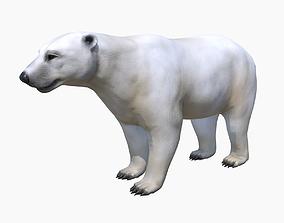 mammal Polar Bear 3D asset animated