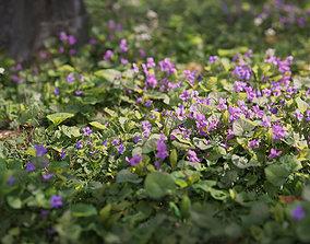 3D asset Sweet violet