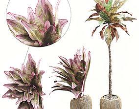 flowerpot 3D model Potted plants Set 34