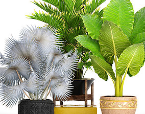 3D model Collection of tropical plants