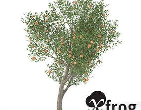 3D model XfrogPlants Peach Tree