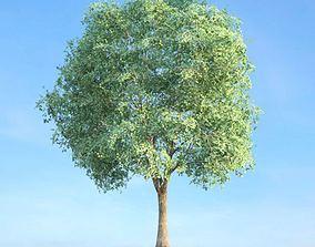 3D model Tall Tree leaf