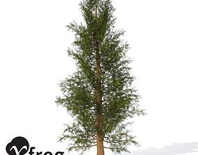 3D model Western Red Cedar Small