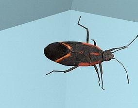 3D asset Box Elder Bug