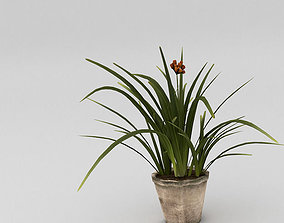 3D model Small plant with pot