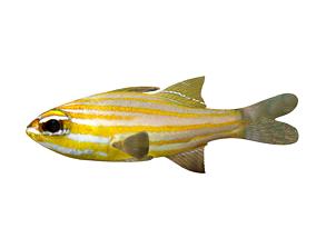 3D sea FISH-001