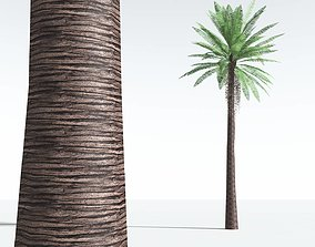 3D asset EVERYPlant Date Palm LowPoly 12 --10 Models--