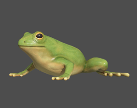 Tree frog 3D model animated