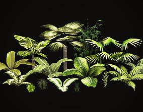 3D asset Tropical vegetation pack