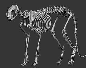 3D Domestic Cat Skeleton