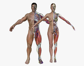 realtime Ultimate Complete Male and Female Anatomy 3