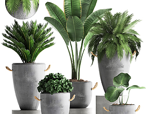 Collection Exotic plants 381 3D