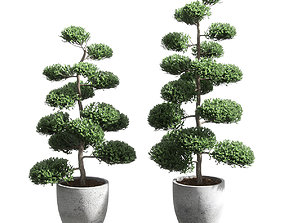3D Bonsai with spherical branches - 2 models