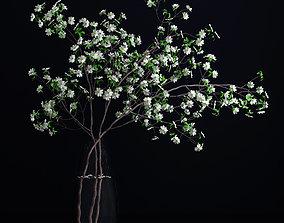 3D cherry Dogwood White Blossom