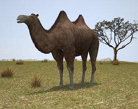 3D Camel Bactrian