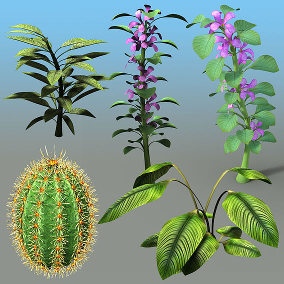 Solid Plants 2