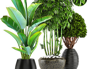 bush 3D model collection of tropical plants