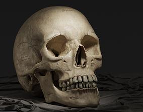 Human Skull 3D model VR / AR ready PBR