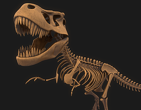 sue T-rex Skeleton 3D