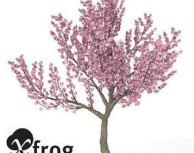 3D XfrogPlants Kanzan Cherry 1 greenworks