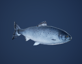 Salmon Fish with Swimming Animation 3D model