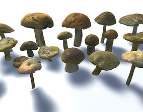 Forest Mushrooms 3D model