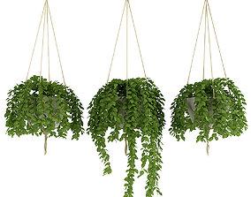 Plants 4 3D