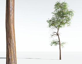 EVERYPlant Muira Puama 11 --15 Models-- 3D