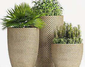 Decorative plant set-62 3D