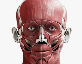 3D PBR Male Muscular System