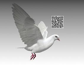 3D model animated White Dove