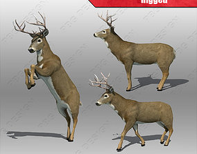 Deer whitetail 3D asset