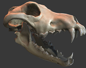 game-ready Wolf Skull Low-poly 3D model
