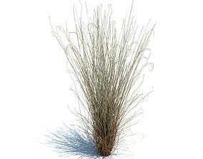 Carex Buchananii Plant 3D model