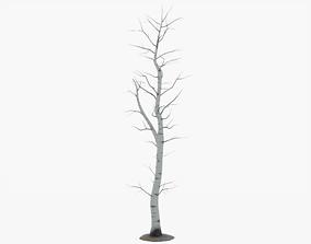 3D model Bare Aspen Tree