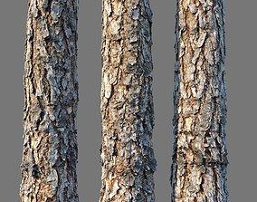 3D asset bark Pine wood 8k seamless material