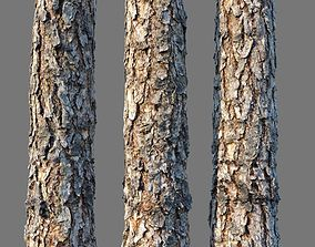 bark Pine wood 8k seamless material detailed 3D model