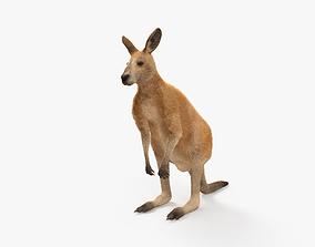 3D model Kangaroo HD