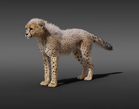 Young Cheetah With Fur 3D