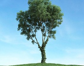 Green Leaf Tree With Vines 3D model